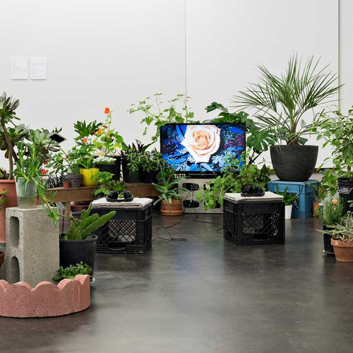 Video installation with live plants.