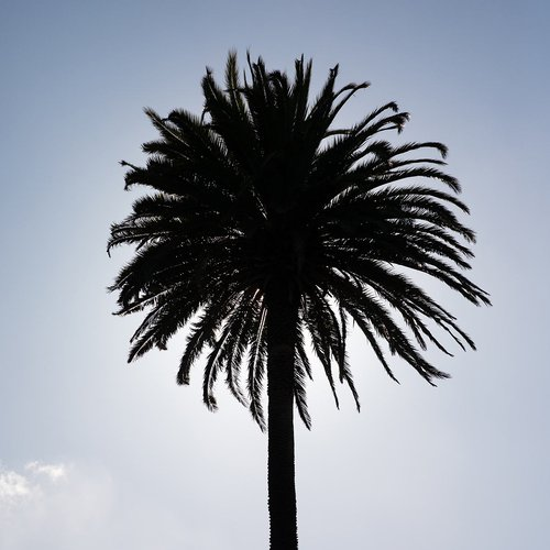 It wouldn't be California without palm trees.