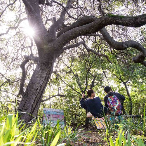 Two students swing on our lush Oakland campus.