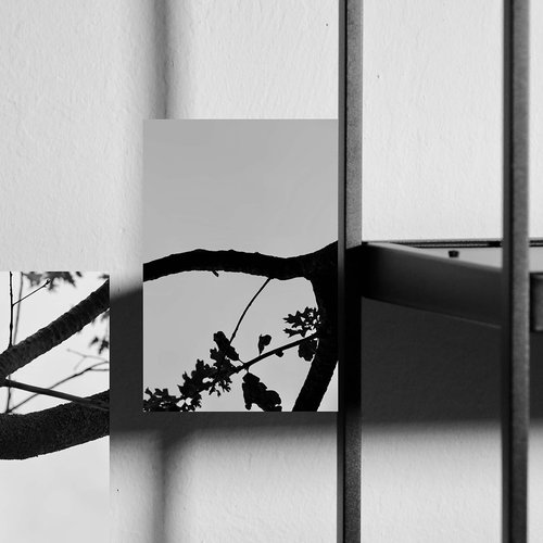 Meg Quarton, Tension Studies, 2020. Photography and collage with powder coated steel and oak tree.